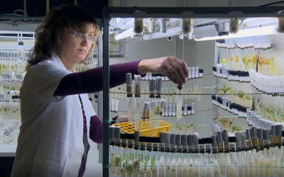 Video: 40 years of soil research